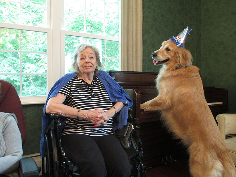 Pet Therapy Golden Moments Dog Visit